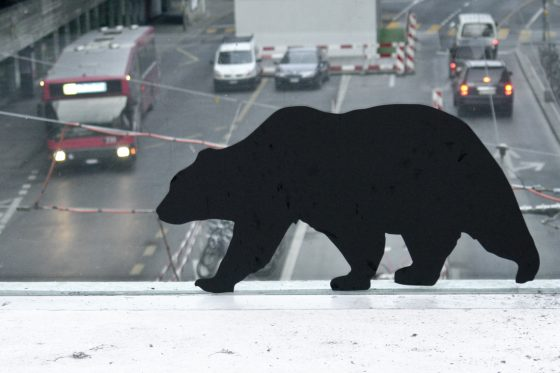 windowzoo bear