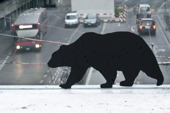 windowzoo bear